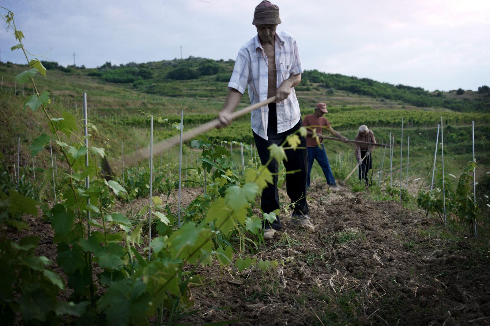 Muncitori pe campul de vie