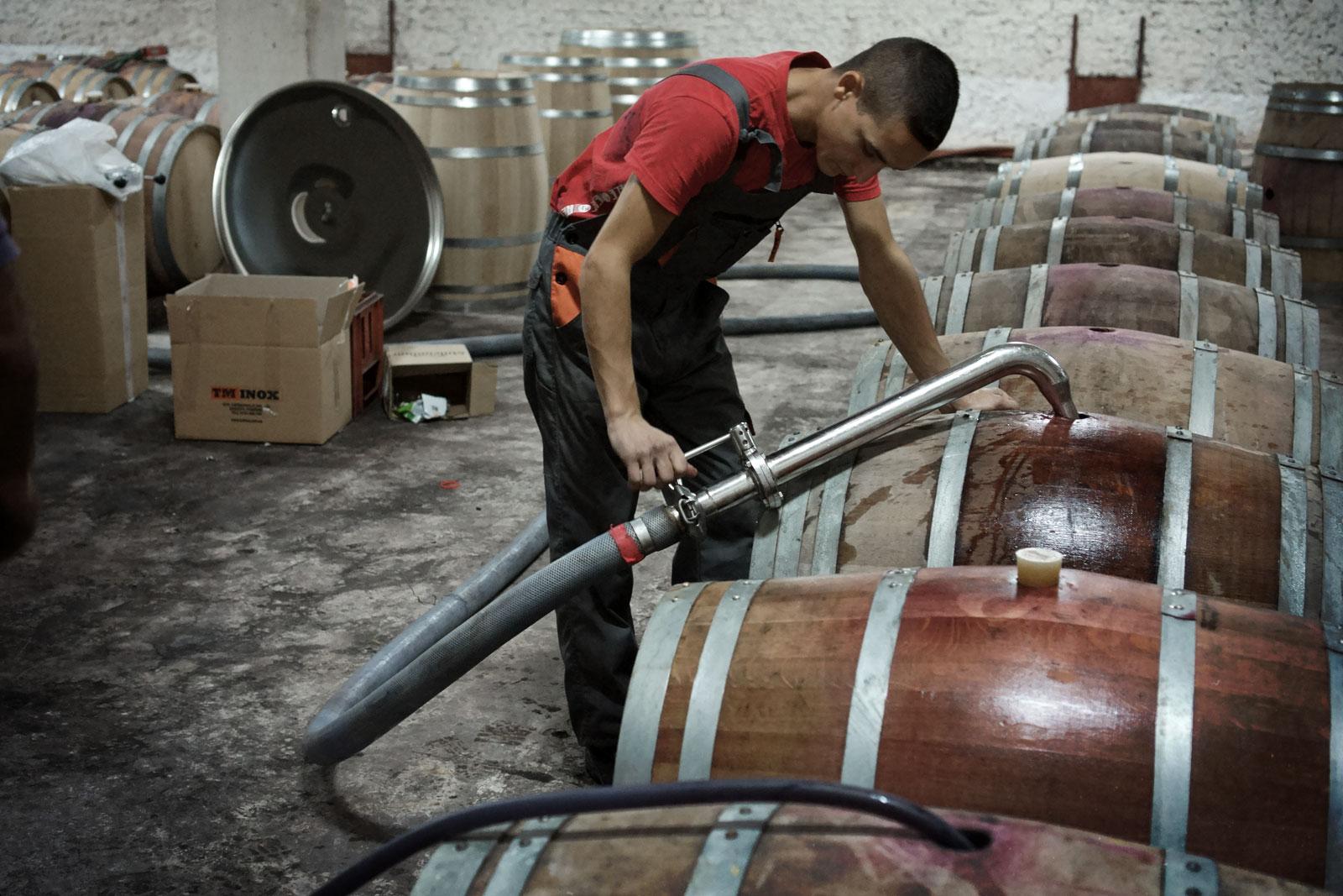 Muncitor umpla butoaie cu vin